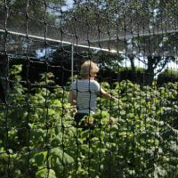 7.5m Walk In Fruit Cage